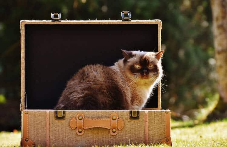 La vacanza dovrebbe sempre essere un piacere, sia per noi che per gli animali: purtroppo in Italia il tasso di abbandono di animali è elevato