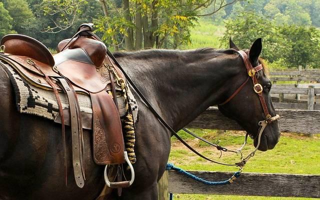 Le selle americane, chiaramente oltre ai cavalli, sono sicuramente un sogno per chi entra nel mondo dell'equitazione...