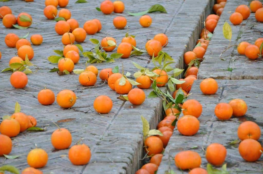 Lancio di arance lungo la Statale Sorrentina nel giorno di carnevale 2018. Ecco il video dei ragazzi che si divertono in questo strano gioco