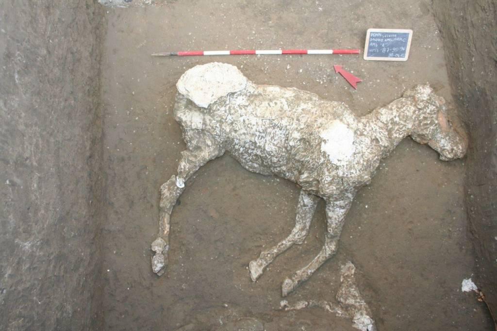 Ritrovati altri due cavalli nell'area archeologica di Civita Giuliana dove è stata rinvenuta e presentata nei giorni scorsi una villa suburbana, una tomba ed una stalla.Si tratta di cavalli importanti, da parata, destinati alla corsa e/o alla rappresentanza.