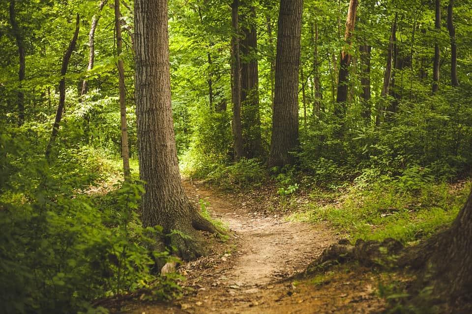 Nono giorno di ricerche: 750 ettari di parco naturale perlustrato da Protezione Civile, Vigili del Fuoco, Carabinieri, Rocciatori, Speleologi, unità cinofile e volontari.Si continuerà a cercare, ma in campo sono rimasti un centinaio di persone. Riferiti alcuni avvistamenti da parte di alcuni testimoni