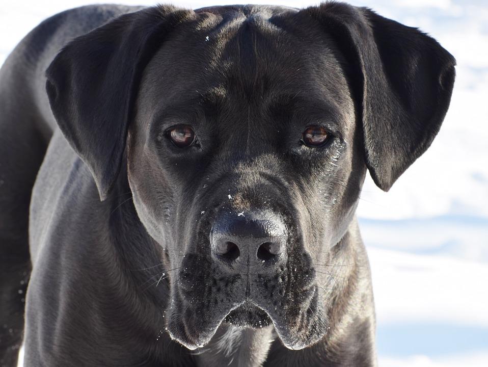 Gianluca Romagnoli, 43 anni, come gli altri giorni, aveva portato a spasso il suo cane,quando Tiago ha azzannato Gianluca ferendolo a morte.